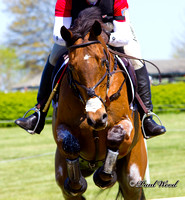 Equine Sports
